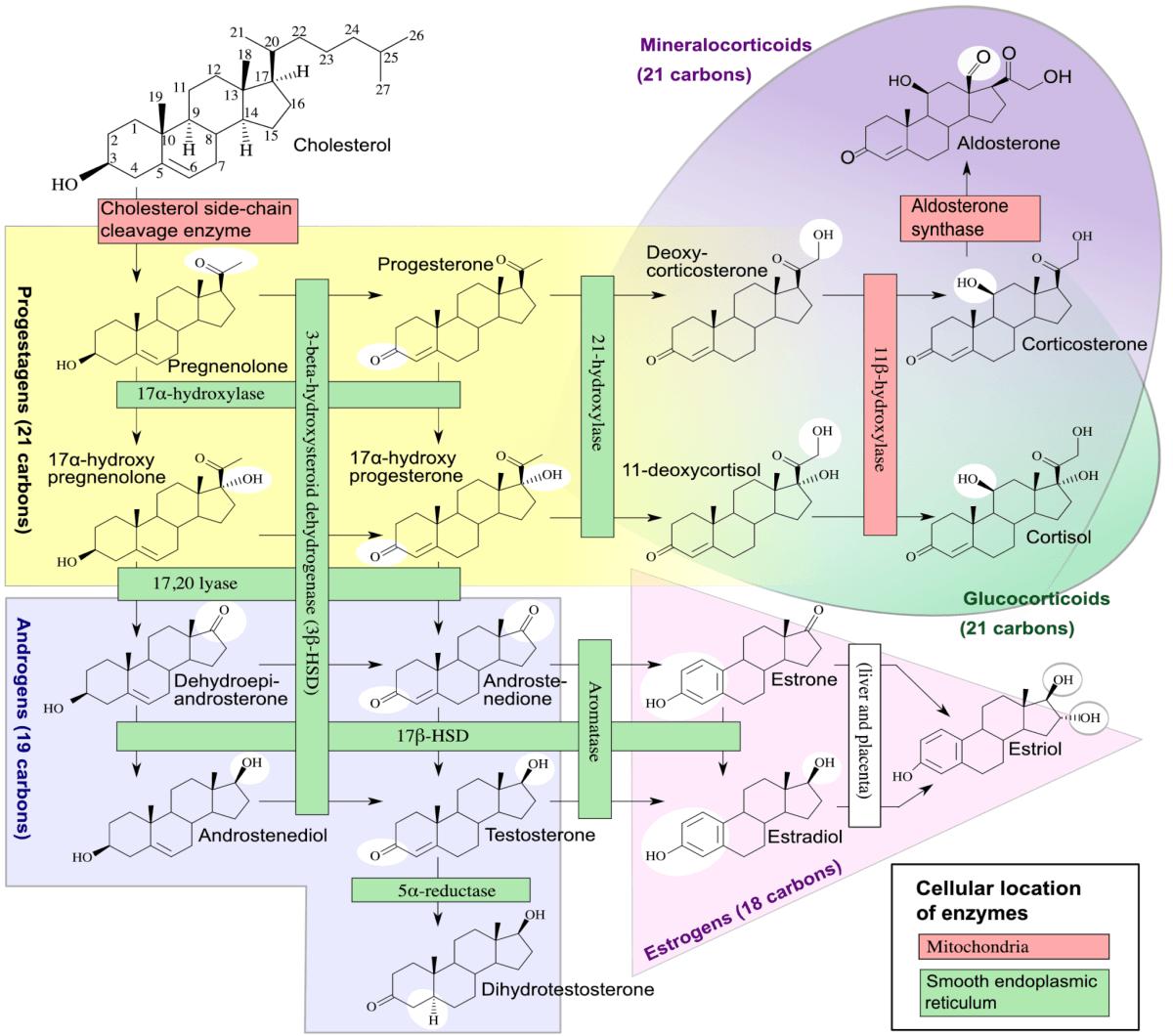 Steroidogenesis Chart