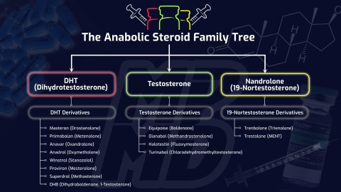 The Anabolic Steroid Family Tree - By: More Plates More Dates (Derek)
