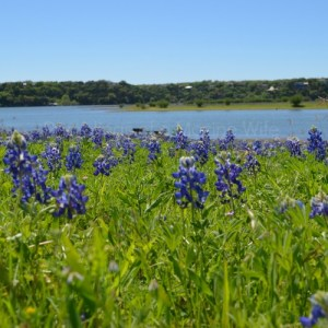 Spring Has Come To Texas! Bluebonnets and Turkey Bend Recreation Area