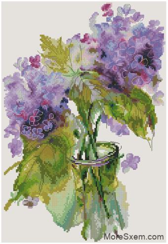 Соцветия гортензии