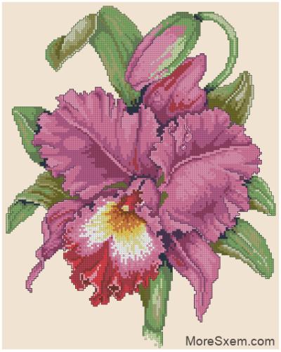 Орхидея с каплей