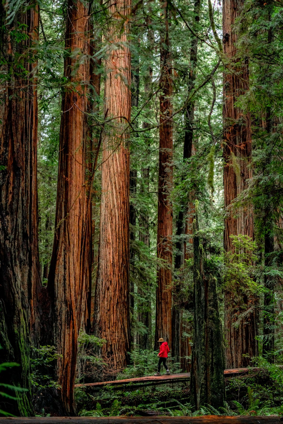 best things to do redwood national park