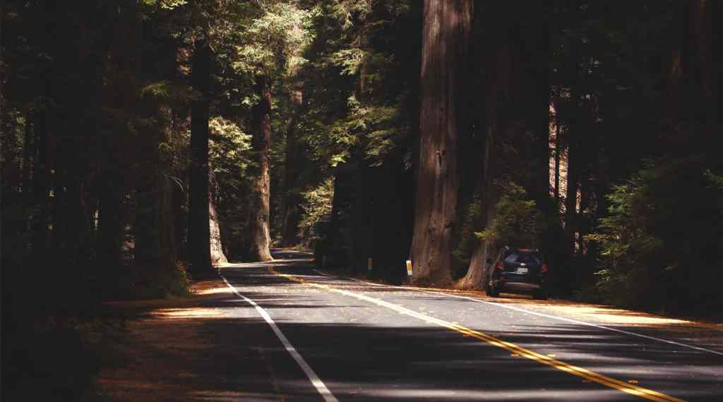 redwood national park driving