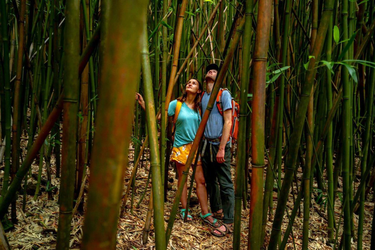 bamboo forest haleakala national park
