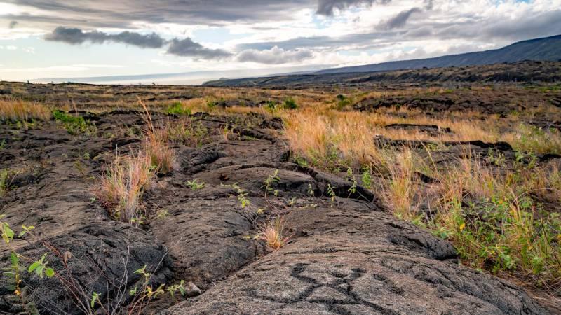 Pu`u Loa Petroglyphs hawaii volcanoes national park