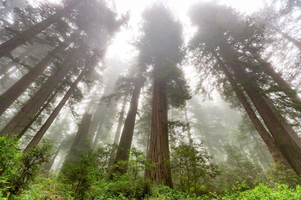 redwood national park fog