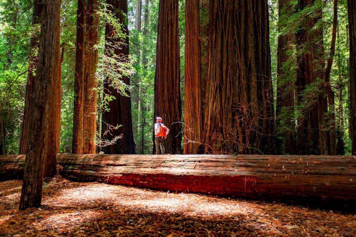 redwood national park hiker