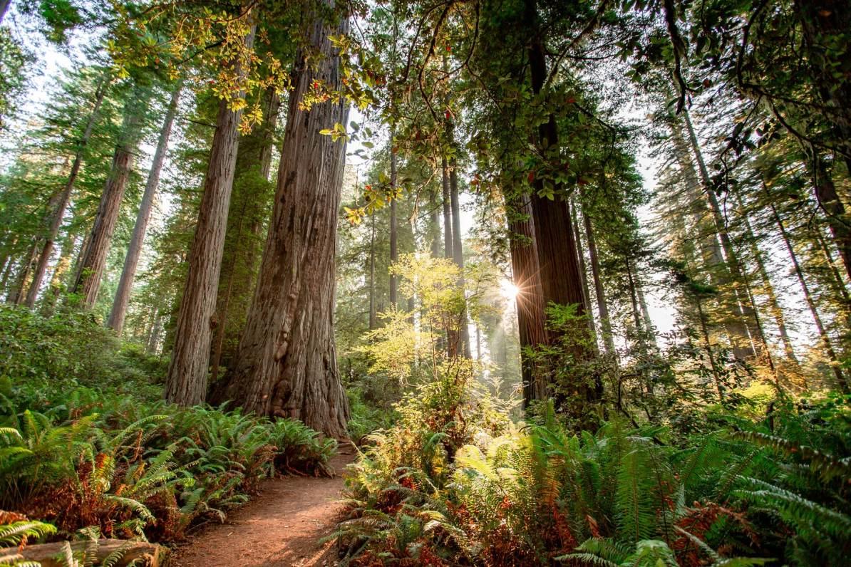 redwood national park lady bird johnson grove