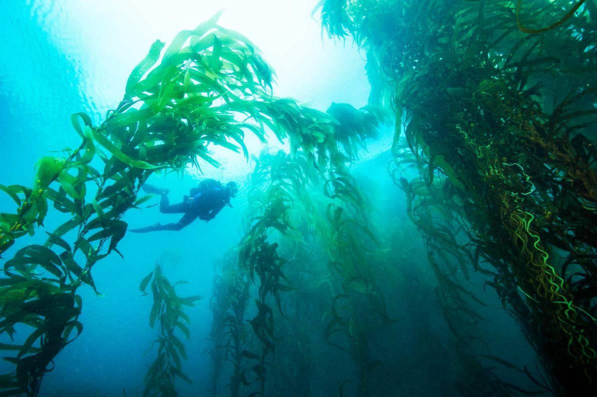 scuba diving channel islands national park california