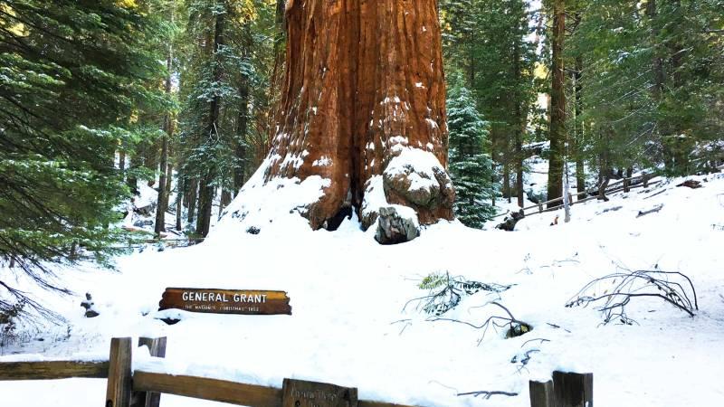 general grant tree kings canyon national park california