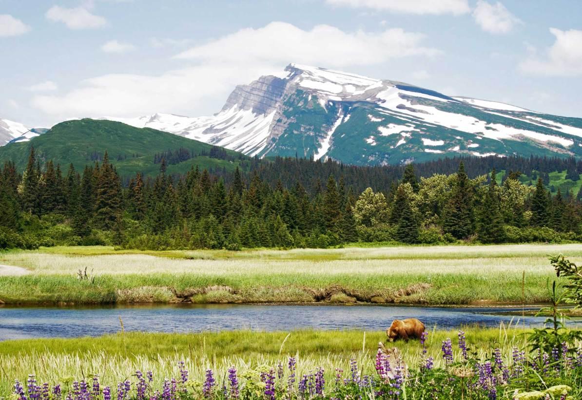 lake clark national park alaska brown bear wildlife