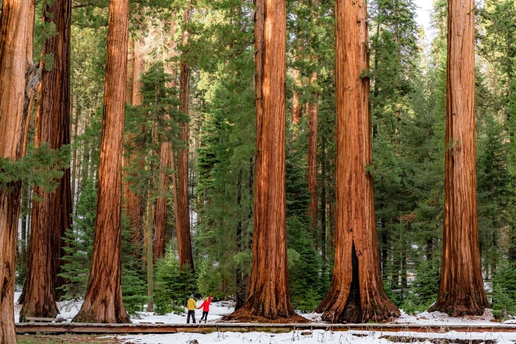 big trees trail sequoia national park california