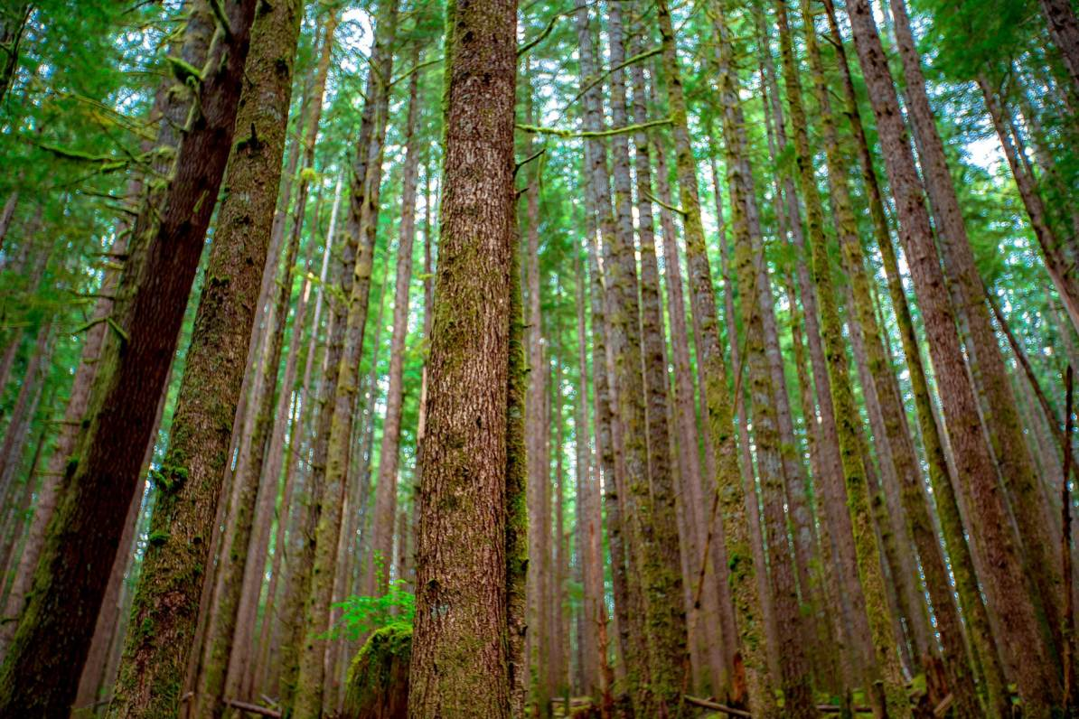 sol duc olympic national park