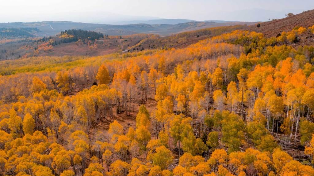 fall foliage fishlake national forest