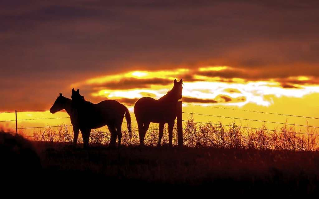 Oklahoma is an amazing place to visit | Oklahoma National Parks
