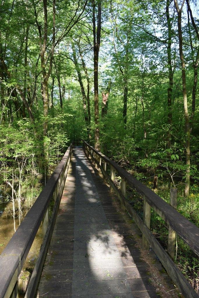 Natchez Trace National Scenic Trail | Mississippi National Parks