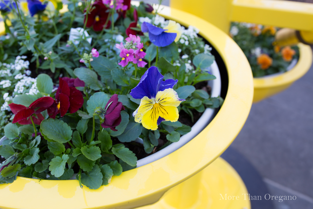 Multicolor_garden_pansies