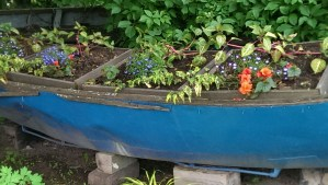 Would You Garden In A Blue Canoe?