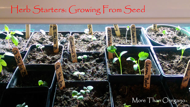 Herb Starters: Growing From Seed