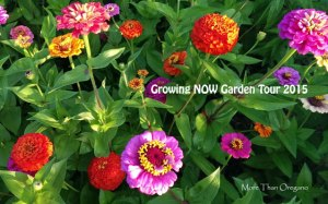 Growing NOW Garden Tour 2015 ~ Kick-off