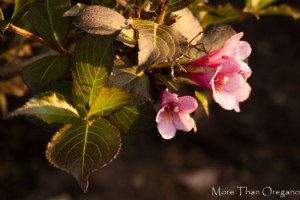 The Color of Spring…