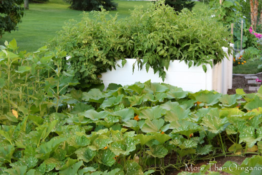 Tips for A Successful African Keyhole Garden