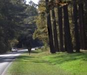 Natchez Trace drive