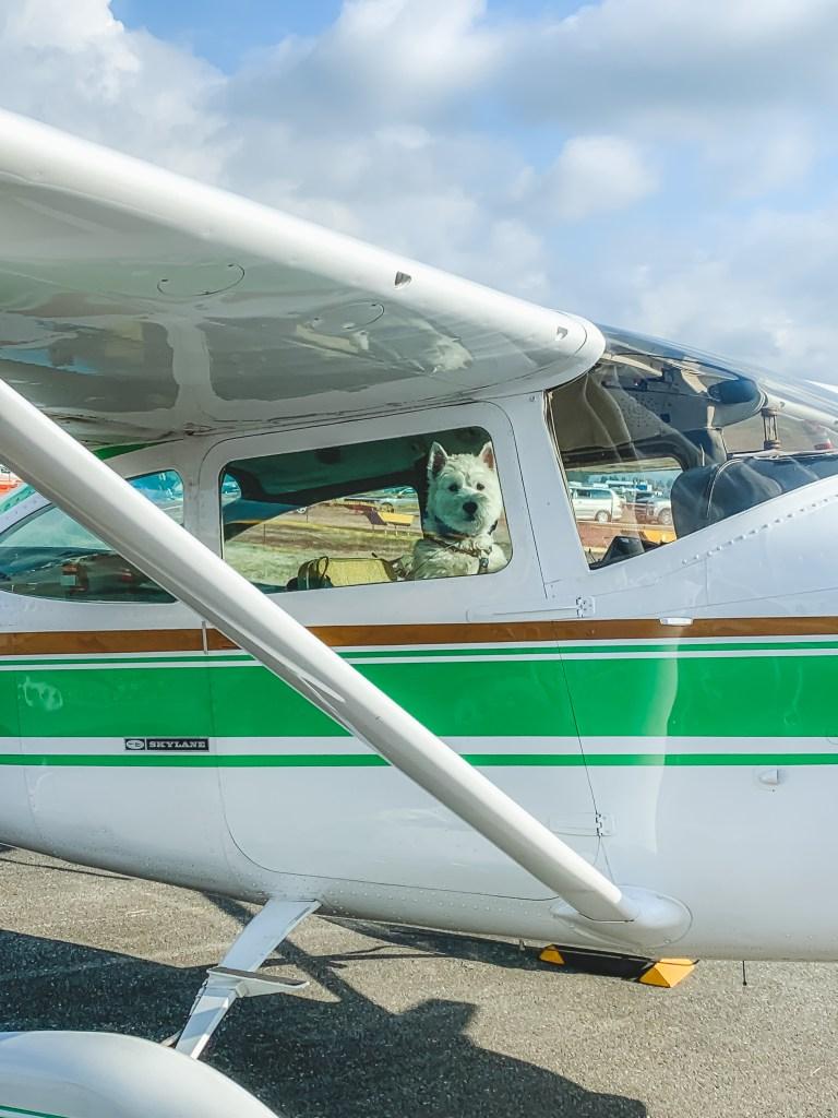 Small dog inside private plane