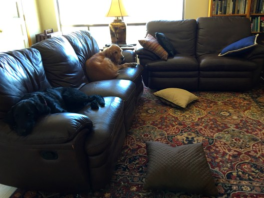 Tucker and Rosie in family room