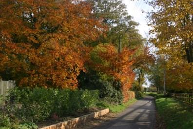 Autumn Colours Hingham