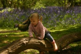 Everdon_Stubbs_Woods_3_may_2014_19