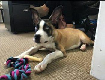 Levi Adoption Story - Authentically Amanda - www.mandamorgan.com