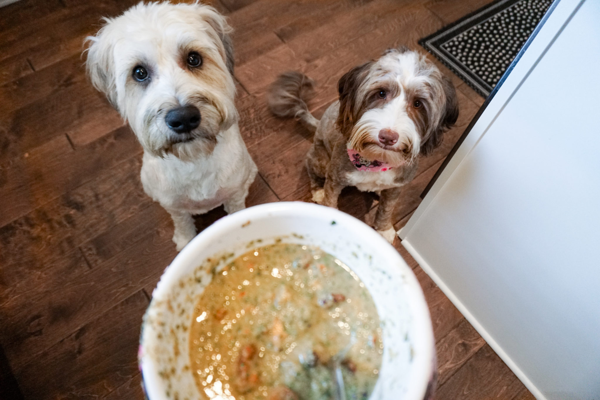 humankind dog food