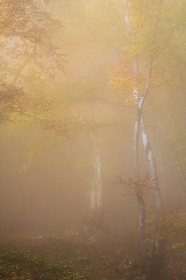 Un rayon de lumière traverse la mer de nuage et illumine la forêt d'automnale