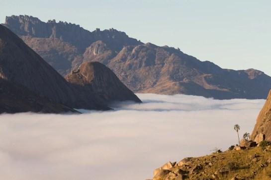 """Un """"cocotier"""" accompagne la mer de nuage matinale au bord du parc national de l'Andringitra"""