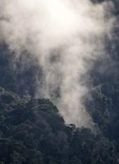 La forêt primaire de Ranomafana respire au début de cette belle journée ensoleillée