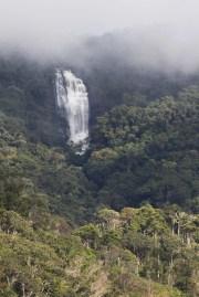 L'eau ne manque pas dans la forêt primaire et de nombreuses espèces d'amphibiens profitent de cette humidité