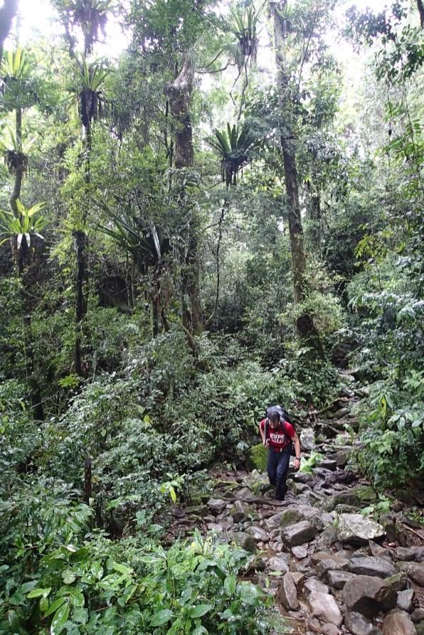 Thomas à nouveau dans la forêt pour la retraverser, cette fois d'Est en Ouest et pour arriver à Ambohimahamasina