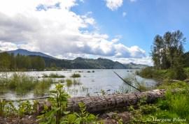 Alder Lake - Washington