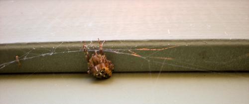 spidersulk-2