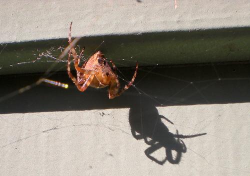 spidersulk
