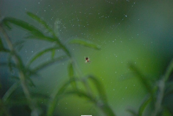 spidergreenbackground