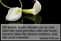 condolence-quotes-3
