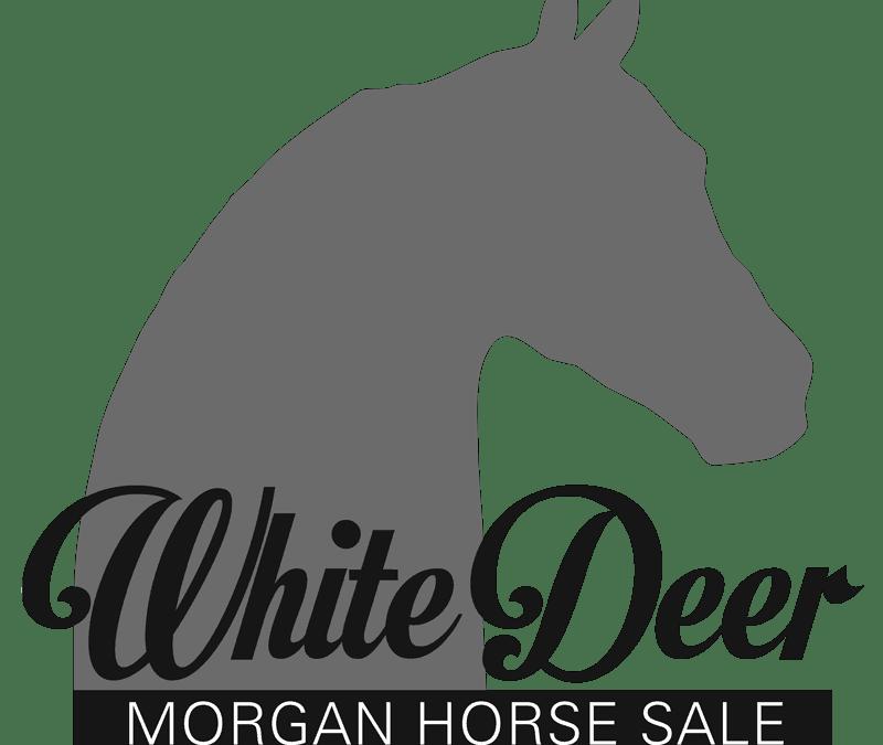 White Deer Morgan Auction Announced