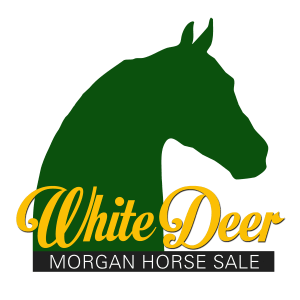 White Deer Morgan Horse Sale