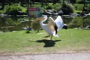 Bird 18 (1)