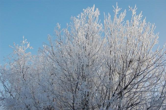 jack frost pics 004
