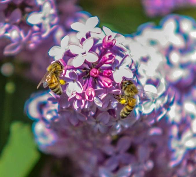 web-bees