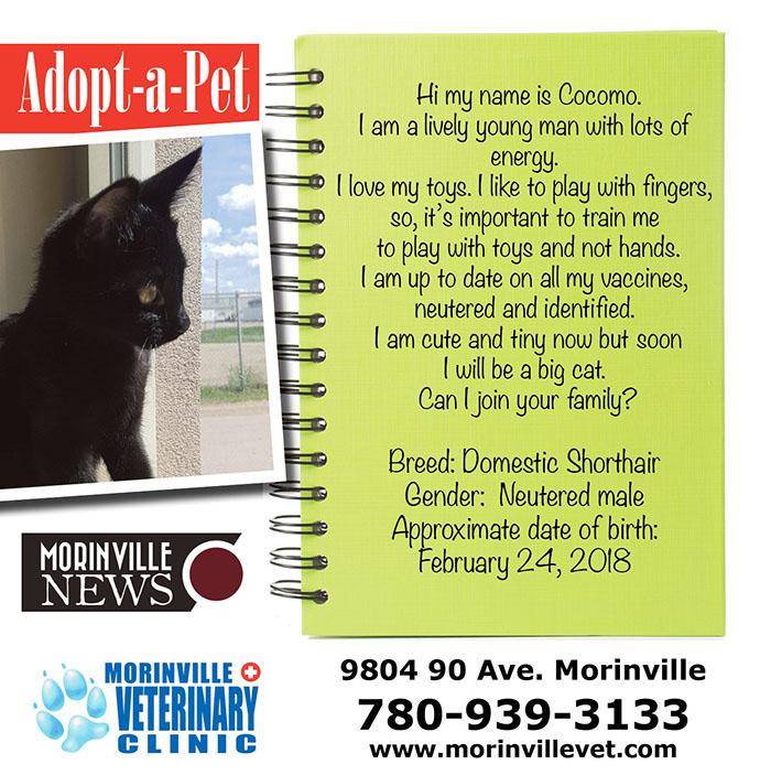 June 4 – Adopt a pet