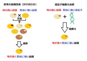 (厚生労働省医薬食品局安全部「遺伝子組換えの安全性について」をもとに作図)